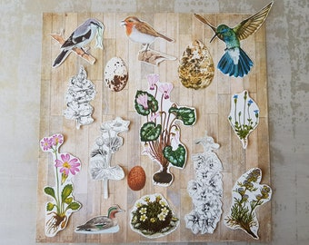 Vintage Paper Ephemera - Birds and Florals 15pcs