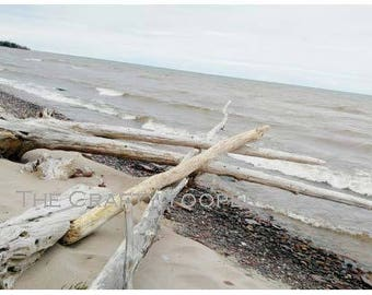 Gull Point Driftwood, 8x10 Print