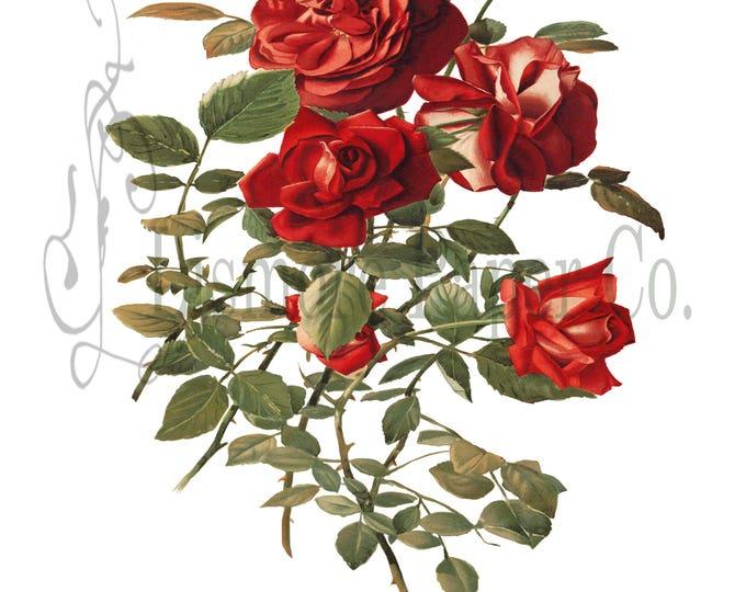 Red Rose Print, Rose Illustration, Botanical Decor, Flower Decor, Digital Art, Printable Art, Instant Download, Architecture Decor, Craft