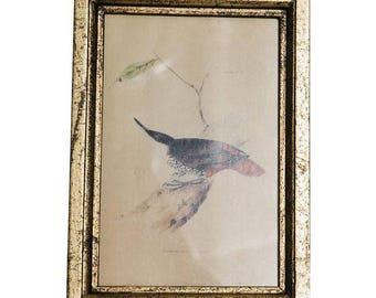 Natural History Print of Bird