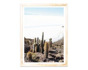 Poster, Cactus, Cactus, desert, Bolivia, landscape