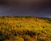 Autumn in Cwmcarn