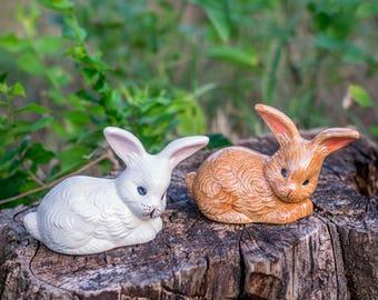 Adorable Little Rabbit