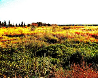 Fields of Autumn II