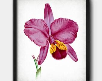 Pink orchid · Flower · Digital File · Instant Download · Botanical #166