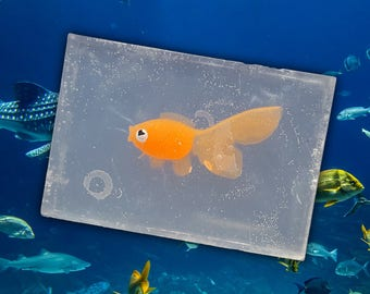 Fish | Soap For Kids!