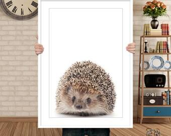 Hedgehog Print, Hedgehog Decor, Woodlands Animal Wall Art, Animal Print, Hedgehog Photo, Animal Decor Baby Gift, Art Print