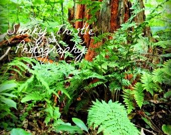 Nature Photography, Beauty, Broken, Smoky Mountains, Ferns, Redwood Tree, Forest Landscape, Gifts Under 25, Asheville, North Carolina Art