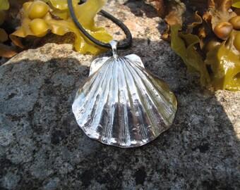Silver scallop