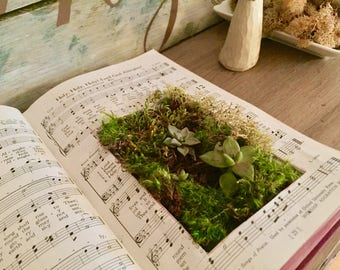 LIVE Succulent Book Planters. Made to Order