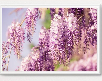 Photo flower Wisteria - floral photo - pink decor wall flower - flower photo - room decor - gift