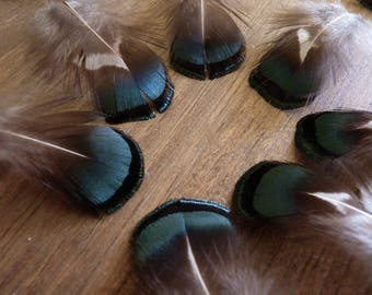 x 6 * extra quality * feathers pheasant lady amherst olive green (S)