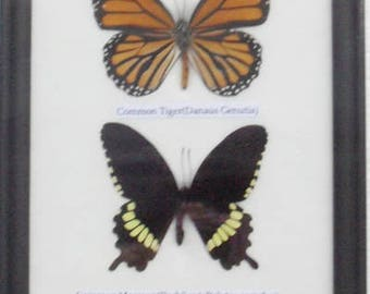 REAL 4 FRAME BUTTERFLY Wall Hanging Collection Taxidermy In framed /B04B
