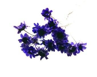 X 1 pretty Daisy mini purple 0.8 cm