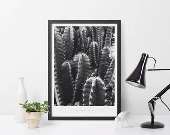 Teotihuacan Botanical Cactus Scandinavian Design Wall Art Poster