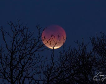 Blood Red Eclipse Moon, January 31 2018, North Texas Landscape, Nature, Wall Art, Photography