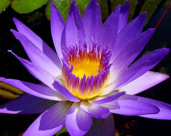 General insight. GENUINE detailed psychic clairvoyant reading.