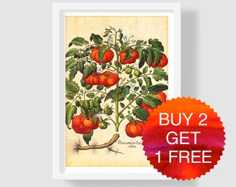 Red Tomato Art Print, Tomato Wall Art, Tomato Kitchen Decor, Vintage Botanical Print, Antique Tomato Print, Tomato Home Decor, Besler 1640