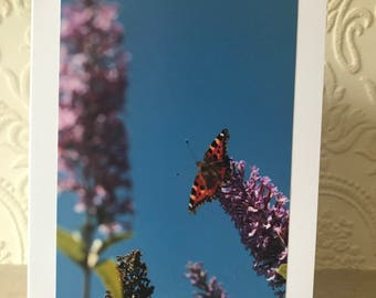 Butterfly photo greeting card - blank inside