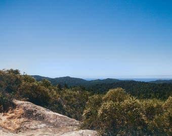 Redwood Forest, California Travel Photograph, Landscape Print