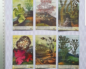 Large, vintage style, nature stickers