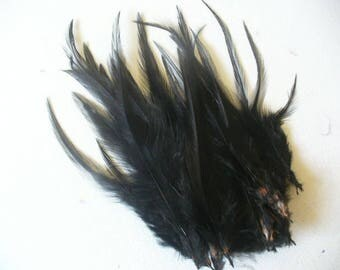 10 black Rooster feathers