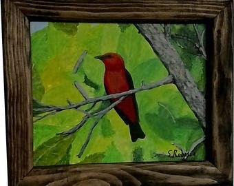 Scarlet Tanager with frame