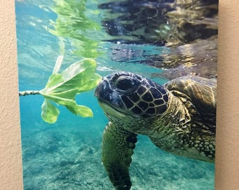 "Hawaiian Honu Green Sea Turtle Canvas Photo Print, 16""x16"""