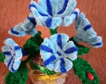 Velvet flowers in a pot of ladybug