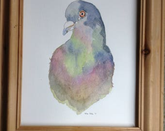 Watercolour painting of a pigeon. Original.