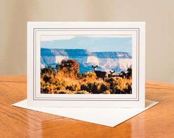 Wildlife Photograph Cards - Set of 4 / Blank Inside / Nature Photo Note Card / Greeting Card Art