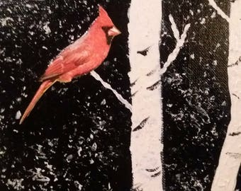 The cardinal and the birch tree