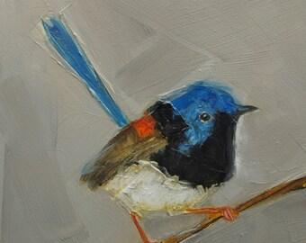 FAIRY WREN BIRD Colette W. Davis Art Giclee print