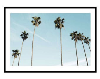 Aqua Palms Photography Print
