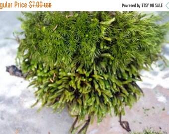 Save25% LIVE Moss-Sheet Moss-Weird and wild mixed up moss-Snack bag full-Terrariums-Pillow moss-Mood moss-Fern moss-Feather moss