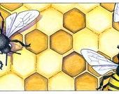 Honey Bees (Apis mellifera) archival print