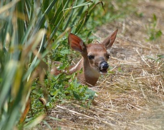 Young Fawn in the Garden Blank Note Card 5 x 7 Perfect All Occasion Card or New Baby Card -  Lovely Nature Photography