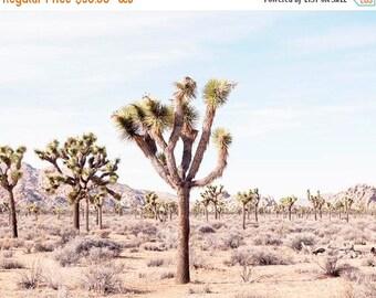 SALE Joshua Tree, Desert Home Decor, Desert Wall Art, Desert Landscape, California, Travel, Wanderlust, California Desert Art, Photography