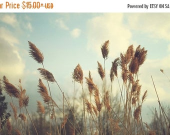 "Nature Photography: Fine Art Photography ""tranquillity"" nature photography wall art botanical art prints wall decor"
