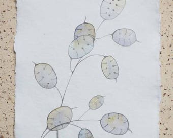Original watercolour illustration painting of silver dollars seeds autumnal painting natural history botanical