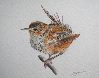 troglodyte mignon, oiseaux, nature, jardin, art, dessin encre et aquarelle, original signé