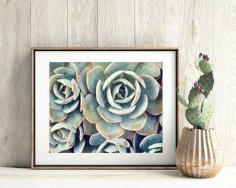 Gardening Gift, Succulent Photograph, Succulent Photography, Nature Photography, Garden Art, Succulent Wall Decor, Succulent Photo