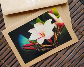 Blank greeting card Plumeria