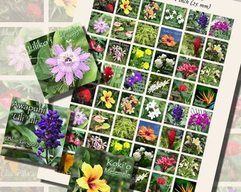 Flowers of Hawai'i, ONE INCH SQUARES (25mm), with 1/2 inch (13mm) and 3/4 inch (20mm) squares included