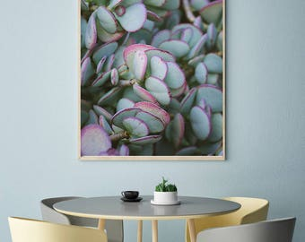 Succulent photography, botanical print, nature photography, botanical art, jade decor, large wall art, boho print, desert photography, blush