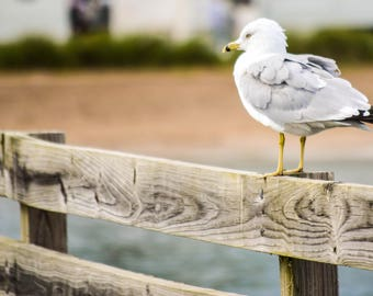 One seagull perching on a fence guardrail on the shore of Lake Huron