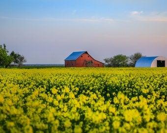 Barn Art, Photography Barn, Barn in Field, Canola Field Art, Oklahoma Farm, Farm Photography, Farm Picture, Country Barn, Picture of Barn