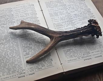 Genuine wild deer horn, antler, natural horn bone, jewelry finding, rustic home decor