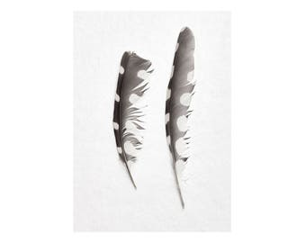 Large Wall Art Print, Fine Art Photography Print, Nature Photography, Neutral Wall Decor, Bird Art, Home Decor, Woodpecker Feather