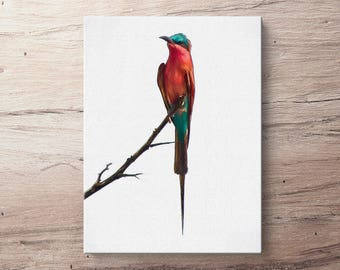 Southern Carmine Bee Eater - Bird Oil Painting Giclee Gallery Mounted Canvas Wall Art Print